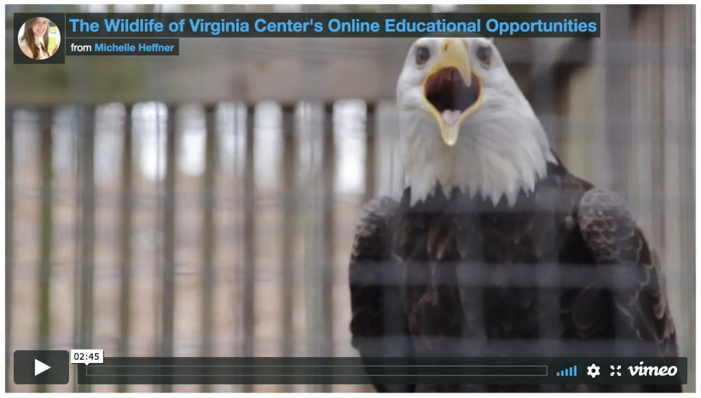 Wildlife Center of Virginia video screenshot