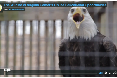 Wildlife Center of Virginia video screenshot